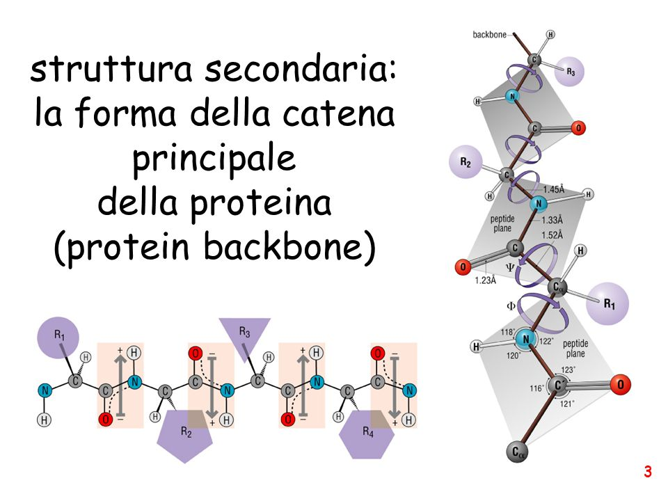 struttura secondaria: la forma della catena principale della proteina (protein backbone) 3