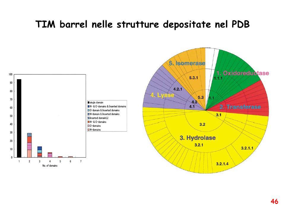 TIM barrel nelle strutture depositate nel PDB 46