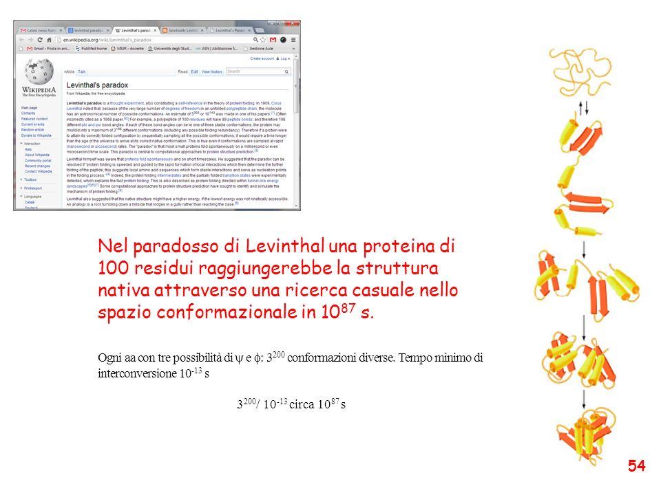 Nel paradosso di Levinthal una proteina di 100 residui raggiungerebbe la struttura nativa attraverso una ricerca casuale nello spazio conformazionale