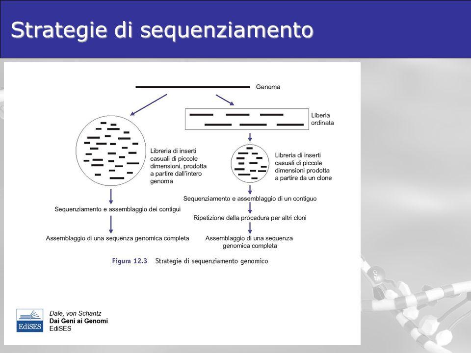 Annotazione delle sequenze genomiche Open Reading Frame: -Presenza dei codoni di stop -Codon usage