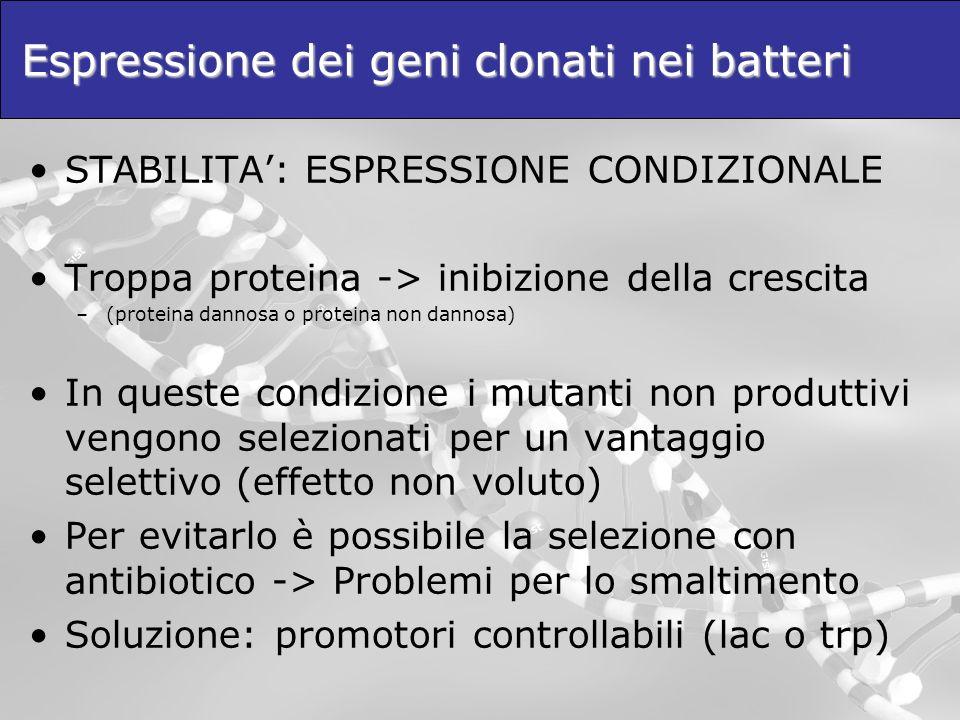 Espressione dei geni clonati nei batteri STABILITA: ESPRESSIONE CONDIZIONALE Troppa proteina -> inibizione della crescita –(proteina dannosa o protein