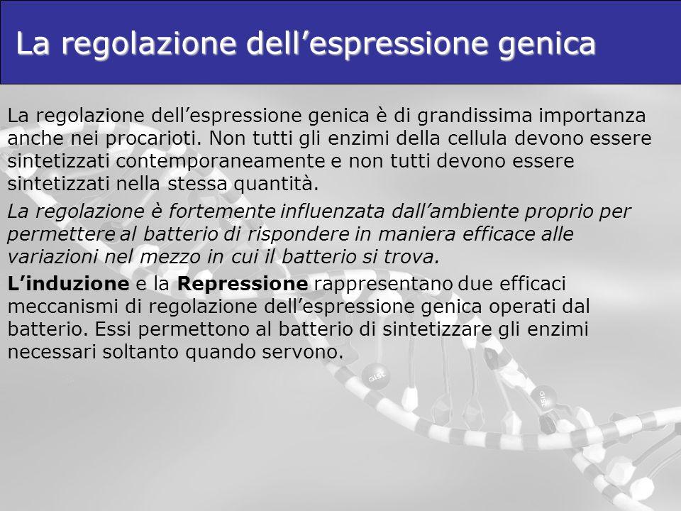 La regolazione dellespressione genica La regolazione dellespressione genica è di grandissima importanza anche nei procarioti. Non tutti gli enzimi del