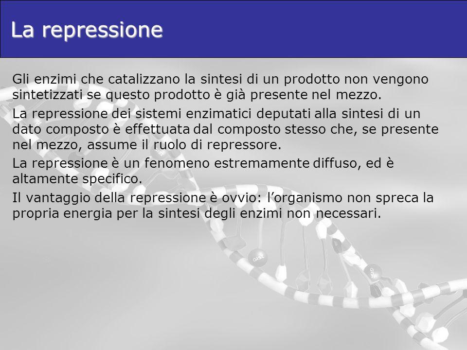 La repressione Gli enzimi che catalizzano la sintesi di un prodotto non vengono sintetizzati se questo prodotto è già presente nel mezzo. La repressio