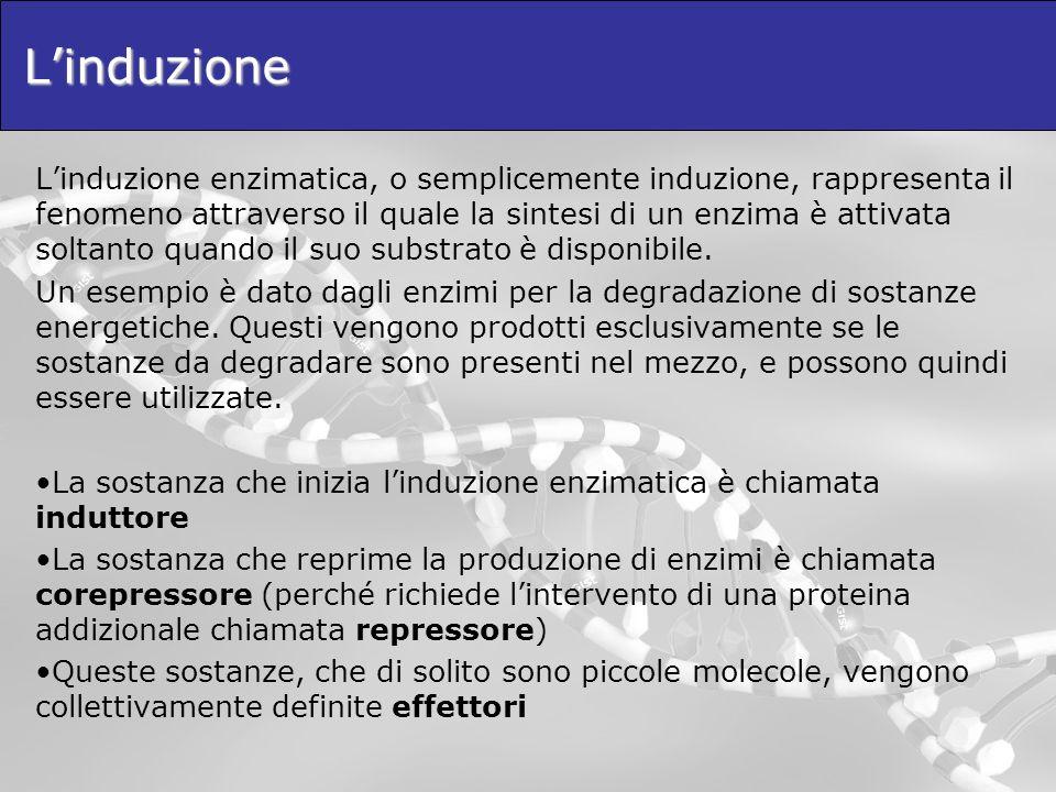 Linduzione Linduzione enzimatica, o semplicemente induzione, rappresenta il fenomeno attraverso il quale la sintesi di un enzima è attivata soltanto q