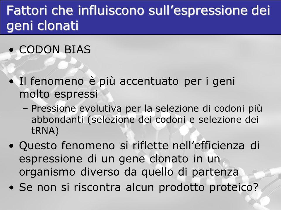 Fattori che influiscono sullespressione dei geni clonati CODON BIAS Il fenomeno è più accentuato per i geni molto espressi –Pressione evolutiva per la