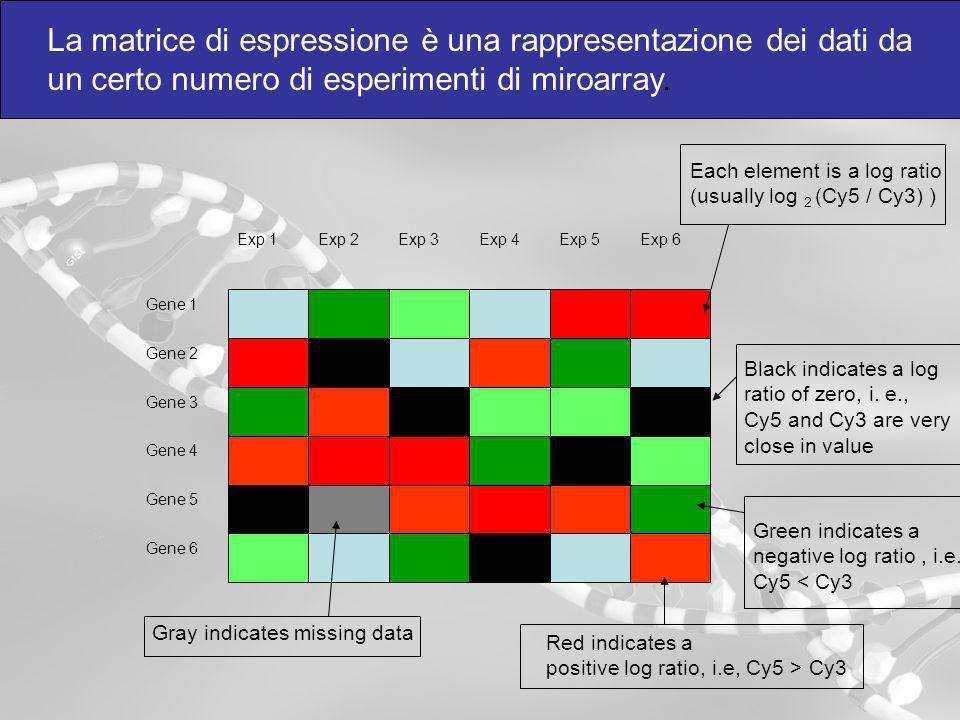 La matrice di espressione è una rappresentazione dei dati da un certo numero di esperimenti di miroarray. Each element is a log ratio (usually log 2 (