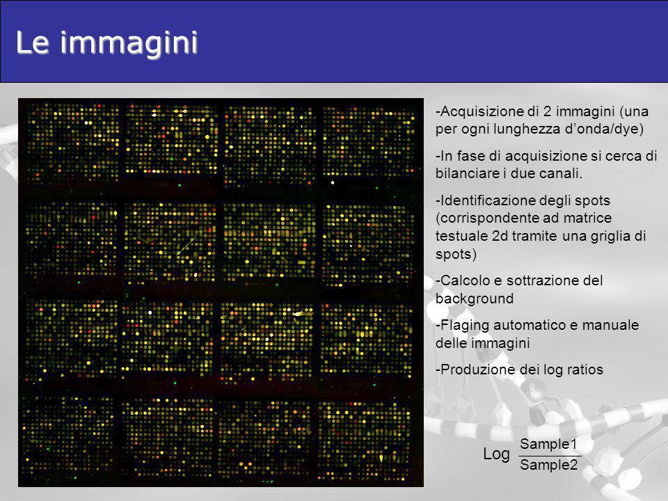Le immagini -Acquisizione di 2 immagini (una per ogni lunghezza donda/dye) -In fase di acquisizione si cerca di bilanciare i due canali. -Identificazi