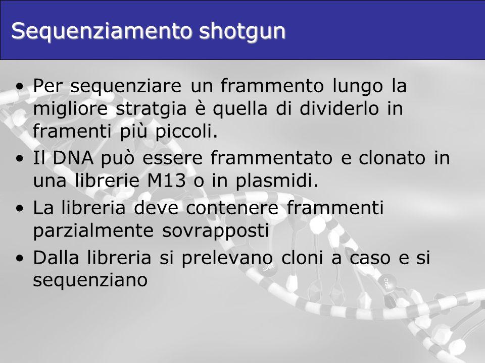 Sequenziamento shotgun Per sequenziare un frammento lungo la migliore stratgia è quella di dividerlo in framenti più piccoli.