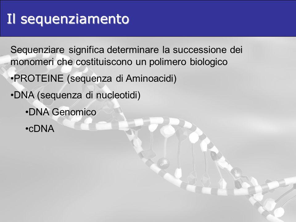 Il sequenziamento Sequenziare significa determinare la successione dei monomeri che costituiscono un polimero biologico PROTEINE (sequenza di Aminoacidi) DNA (sequenza di nucleotidi) DNA Genomico cDNA