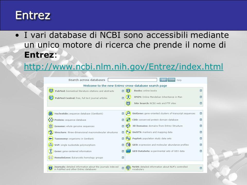 EntrezEntrez I vari database di NCBI sono accessibili mediante un unico motore di ricerca che prende il nome di Entrez: http://www.ncbi.nlm.nih.gov/Entrez/index.html