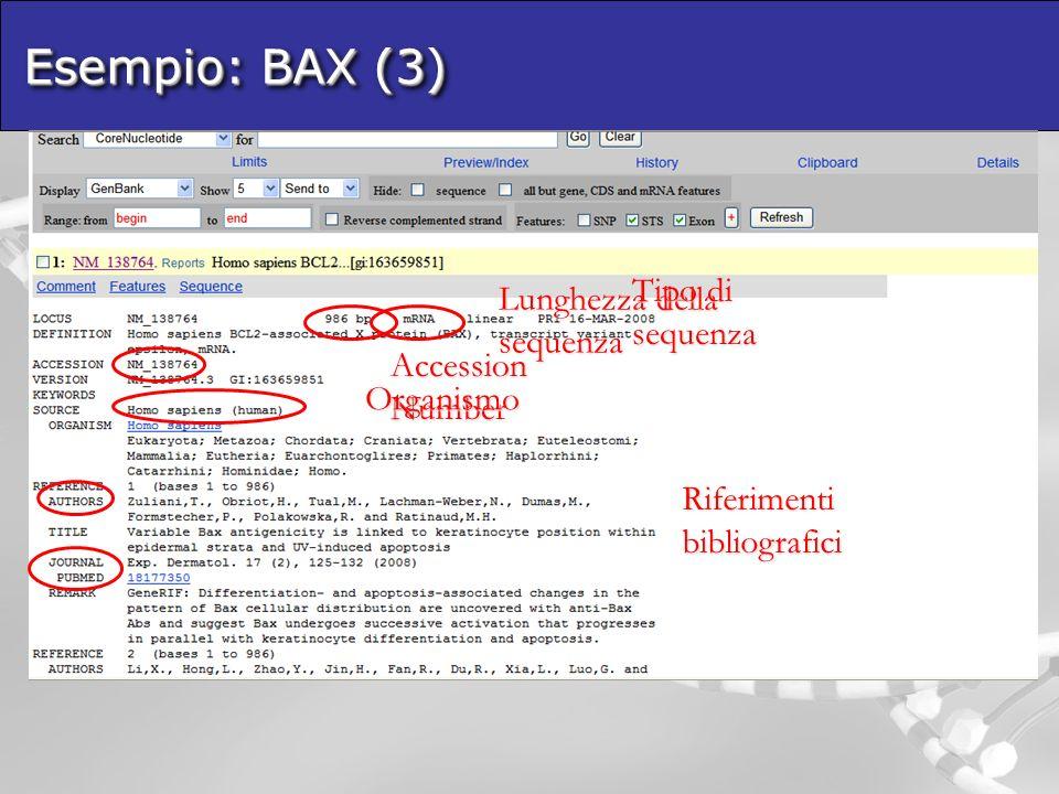 Esempio: BAX (3) Lunghezza della sequenza Tipo di sequenza Accession Number Organismo Riferimenti bibliografici