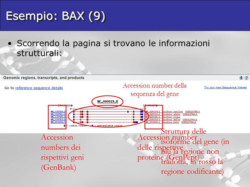 Esempio: BAX (9) Scorrendo la pagina si trovano le informazioni strutturali: Accession number della sequenza del gene Struttura delle isoforme del gene (in blu la regione non tradotta, in rosso la regione codificante) Accession numbers dei rispettivi geni (GenBank) Accession number delle rispettive proteine (GenPept)
