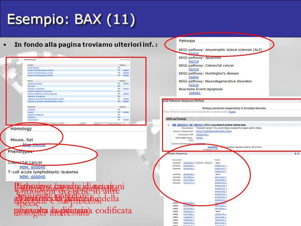 Esempio: BAX (11) In fondo alla pagina troviamo ulteriori inf.