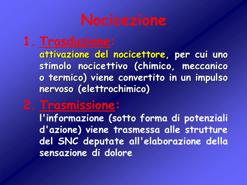 Nocicezione attivazione del nocicettore, per cui uno stimolo nocicettivo (chimico, meccanico o termico) viene convertito in un impulso nervoso (elettr