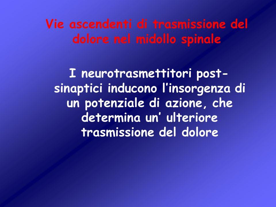 Vie ascendenti di trasmissione del dolore nel midollo spinale I neurotrasmettitori post- sinaptici inducono linsorgenza di un potenziale di azione, ch