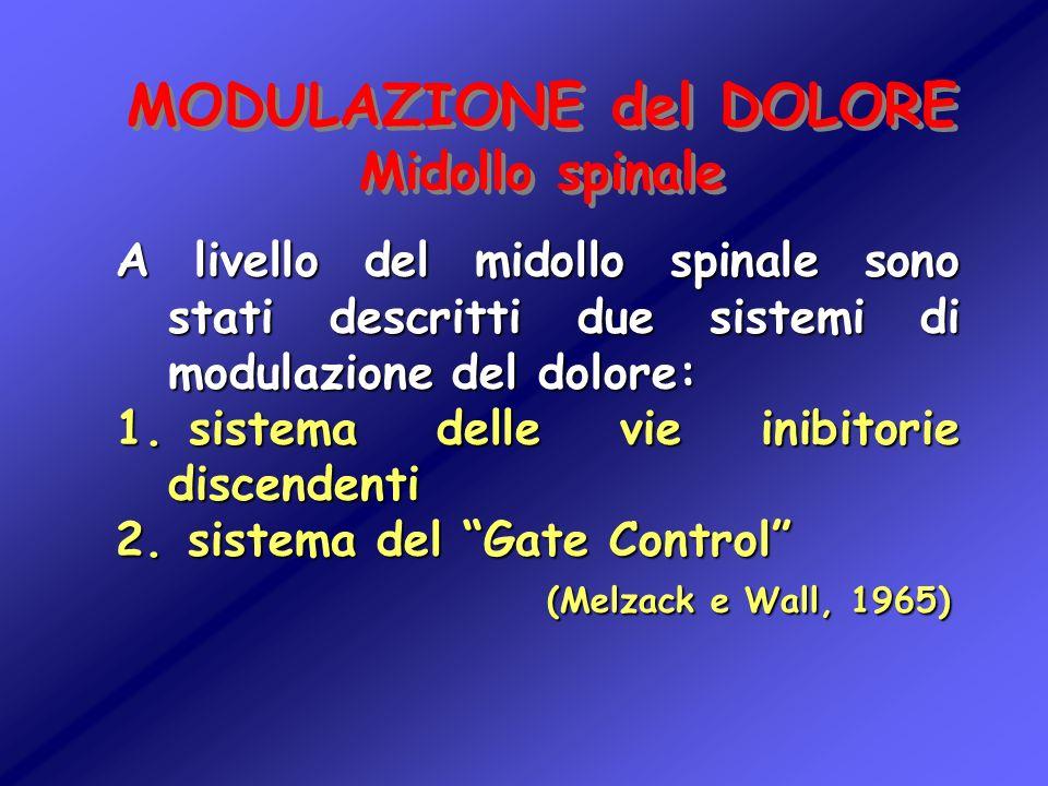 MODULAZIONE del DOLORE Midollo spinale MODULAZIONE del DOLORE Midollo spinale A livello del midollo spinale sono stati descritti due sistemi di modula
