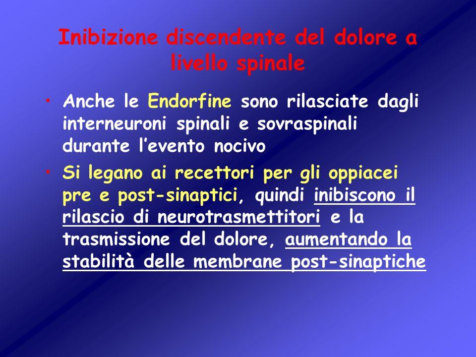Inibizione discendente del dolore a livello spinale Anche le Endorfine sono rilasciate dagli interneuroni spinali e sovraspinali durante levento nociv