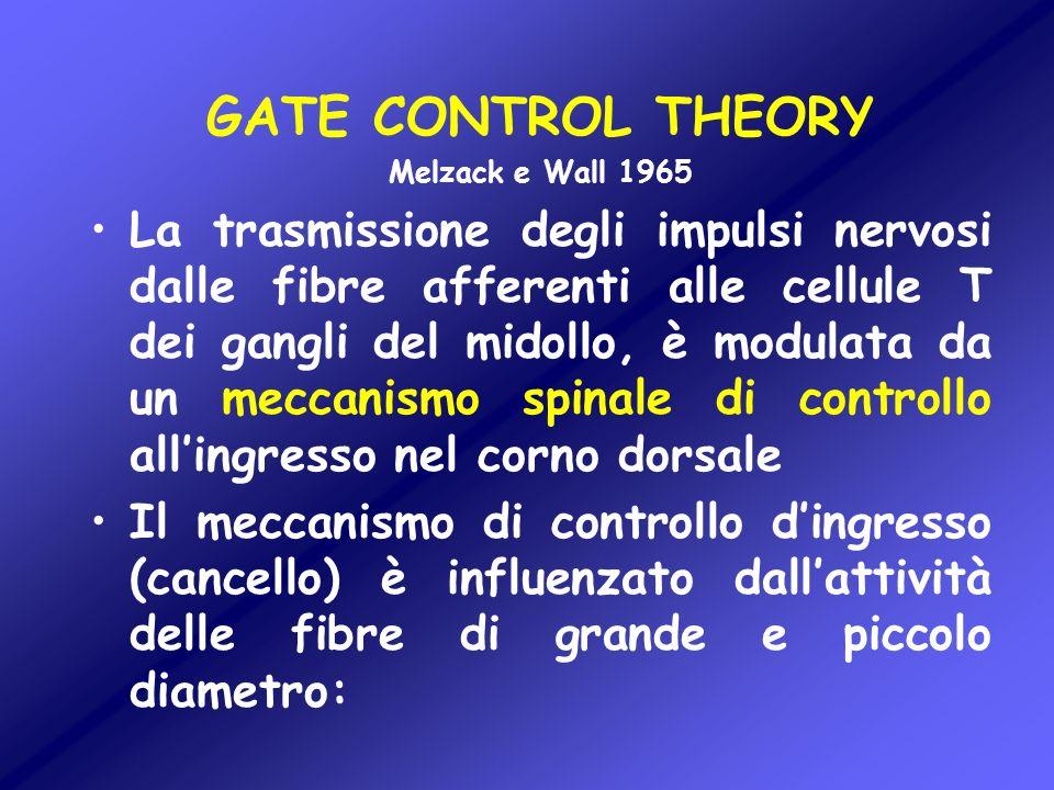 GATE CONTROL THEORY Melzack e Wall 1965 La trasmissione degli impulsi nervosi dalle fibre afferenti alle cellule T dei gangli del midollo, è modulata