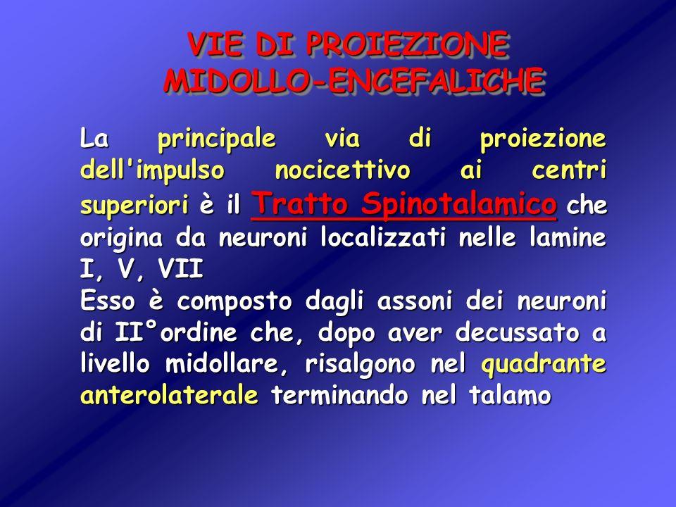 VIE DI PROIEZIONE MIDOLLO-ENCEFALICHE La principale via di proiezione dell'impulso nocicettivo ai centri superiori è il Tratto Spinotalamico che origi