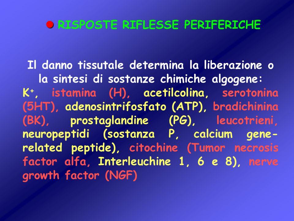RISPOSTE RIFLESSE PERIFERICHE Il danno tissutale determina la liberazione o la sintesi di sostanze chimiche algogene: K +, istamina (H), acetilcolina,