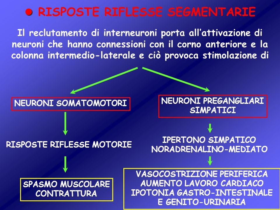 Il reclutamento di interneuroni porta allattivazione di neuroni che hanno connessioni con il corno anteriore e la colonna intermedio-laterale e ciò pr