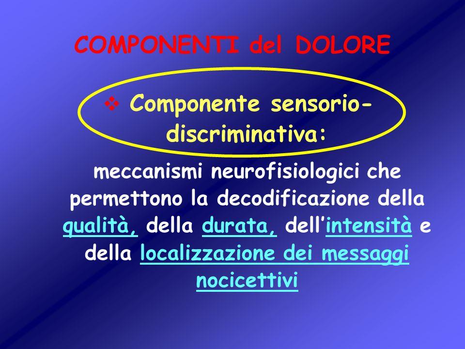 COMPONENTI del DOLORE Componente sensorio- discriminativa: meccanismi neurofisiologici che permettono la decodificazione della qualità, della durata,