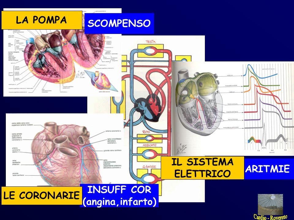 SCOMPENSO INSUFF COR (angina,infarto) ARITMIE LA POMPA LE CORONARIE IL SISTEMA ELETTRICO DISPNEA (respiro difficoltoso, affanno, fiato corto) ANGINA (dolore, oppressione stringimento al petto) CARDIPALMO (sensazione molesta del battito cardiaco)