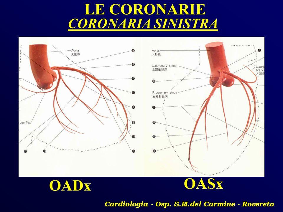 Cardiologia - Osp. S.M.del Carmine - Rovereto LE CORONARIE OADx OASx CORONARIA SINISTRA