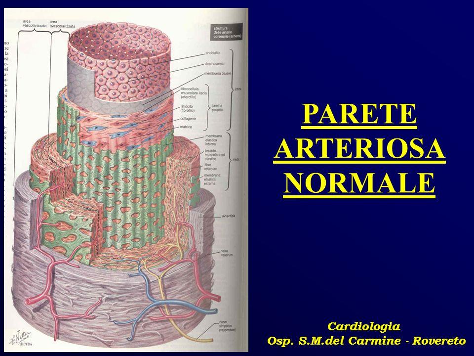Cardiologia Osp. S.M.del Carmine - Rovereto PARETE ARTERIOSA NORMALE