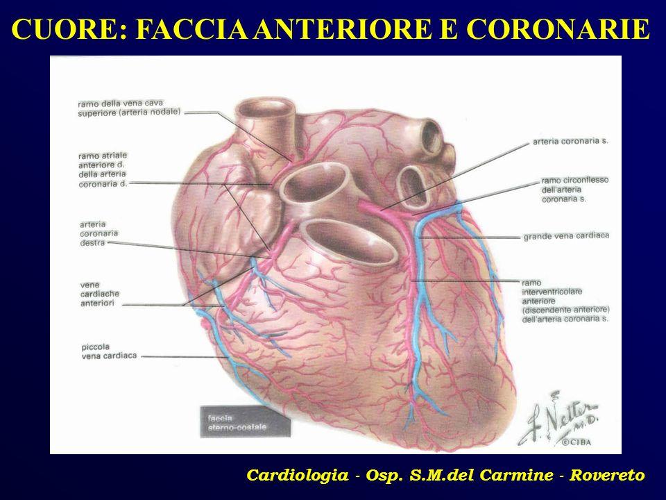 Cardiologia - Osp. S.M.del Carmine - Rovereto CUORE: FACCIA ANTERIORE E CORONARIE