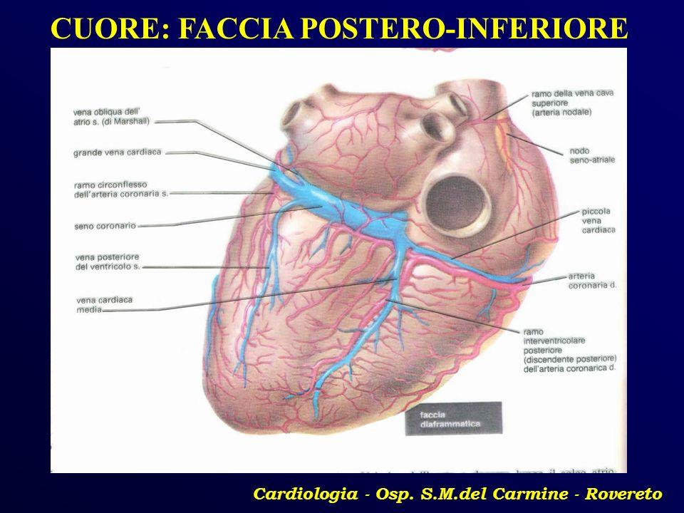 Cardiologia - Osp. S.M.del Carmine - Rovereto CUORE: FACCIA POSTERO-INFERIORE