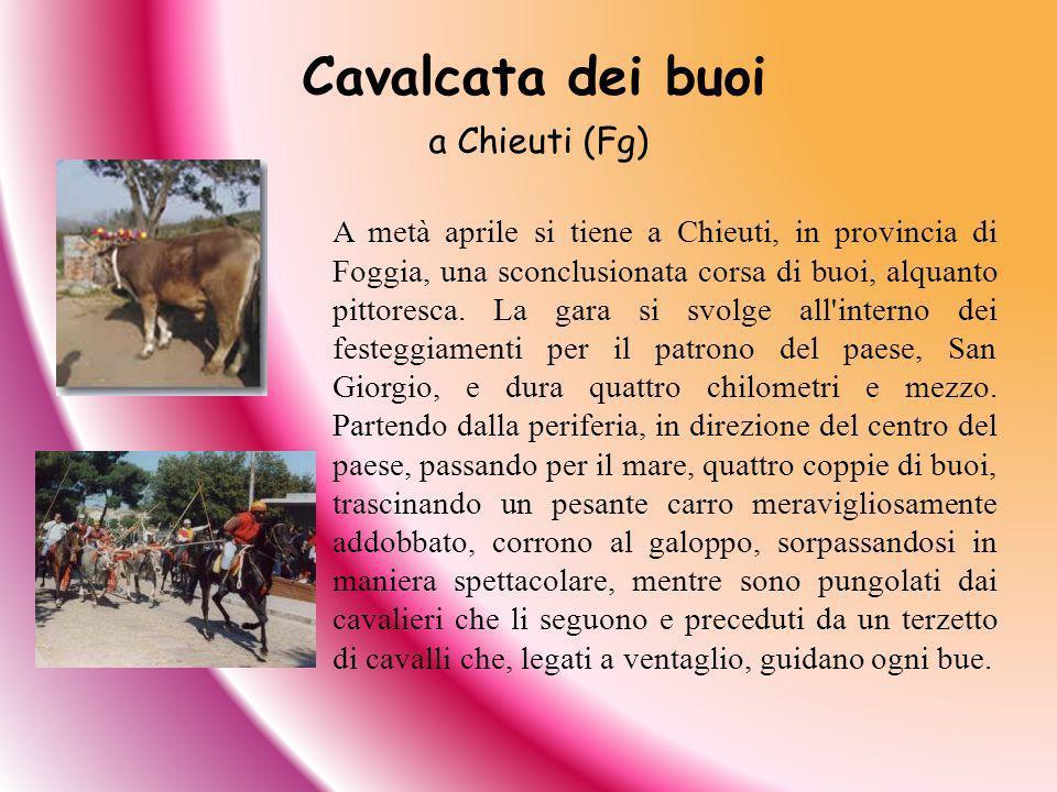 A metà aprile si tiene a Chieuti, in provincia di Foggia, una sconclusionata corsa di buoi, alquanto pittoresca. La gara si svolge all'interno dei fes