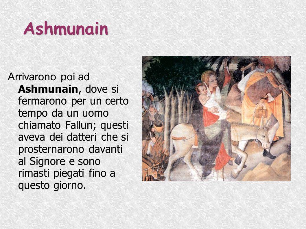 Ashmunain Arrivarono poi ad Ashmunain, dove si fermarono per un certo tempo da un uomo chiamato Fallun; questi aveva dei datteri che si prosternarono