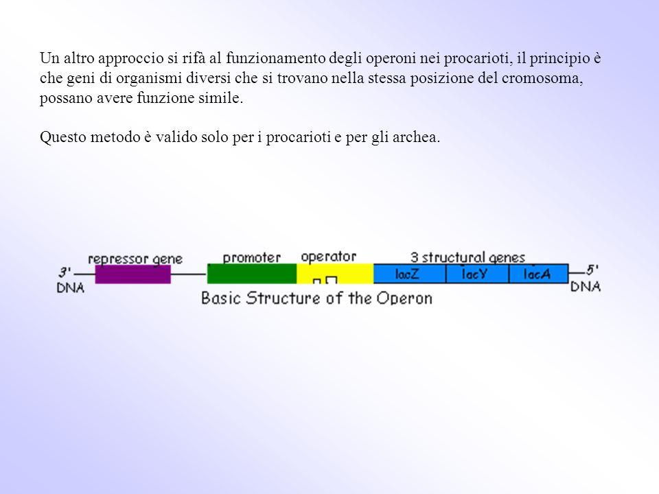 Un altro approccio si rifà al funzionamento degli operoni nei procarioti, il principio è che geni di organismi diversi che si trovano nella stessa pos