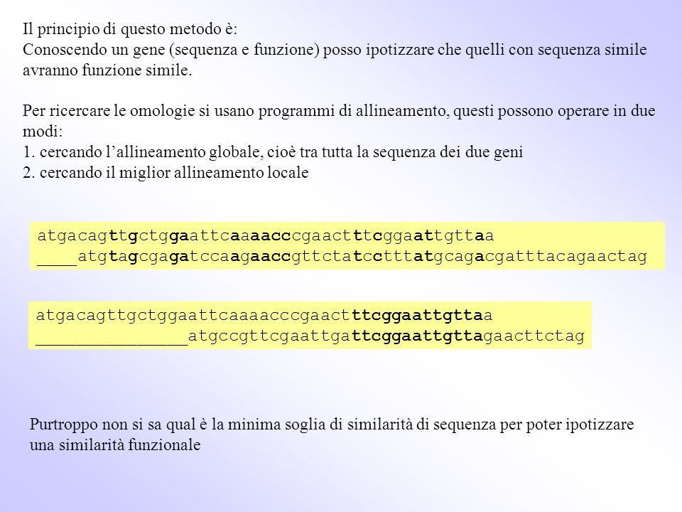 Il principio di questo metodo è: Conoscendo un gene (sequenza e funzione) posso ipotizzare che quelli con sequenza simile avranno funzione simile. Per