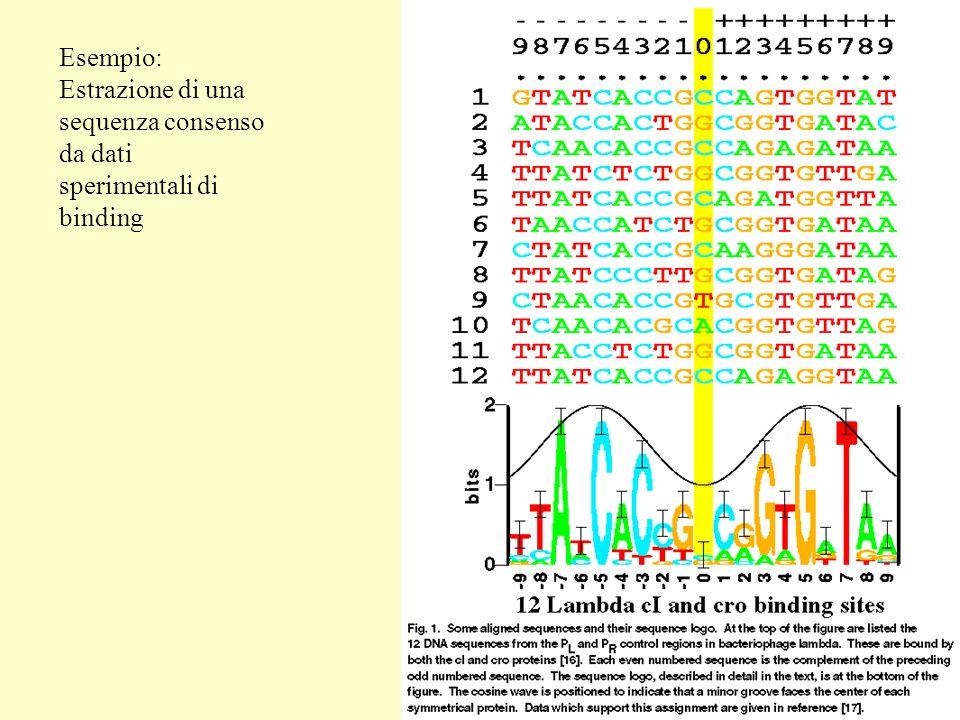 Esempio: Estrazione di una sequenza consenso da dati sperimentali di binding
