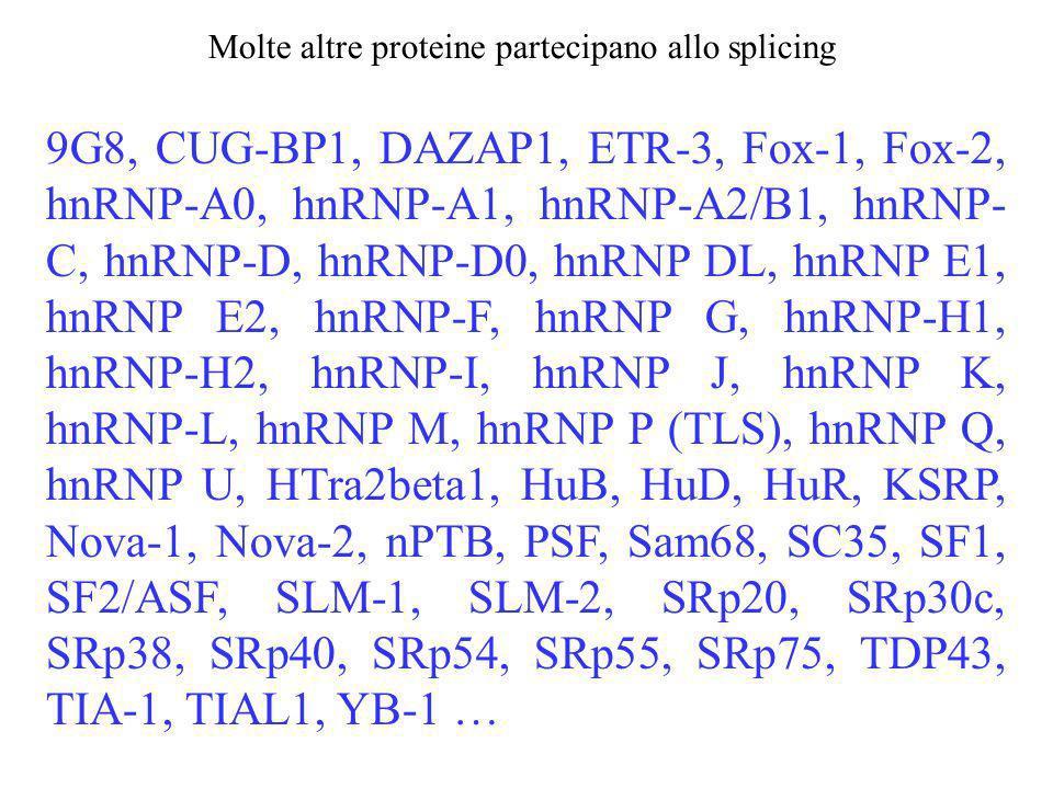 9G8, CUG-BP1, DAZAP1, ETR-3, Fox-1, Fox-2, hnRNP-A0, hnRNP-A1, hnRNP-A2/B1, hnRNP- C, hnRNP-D, hnRNP-D0, hnRNP DL, hnRNP E1, hnRNP E2, hnRNP-F, hnRNP