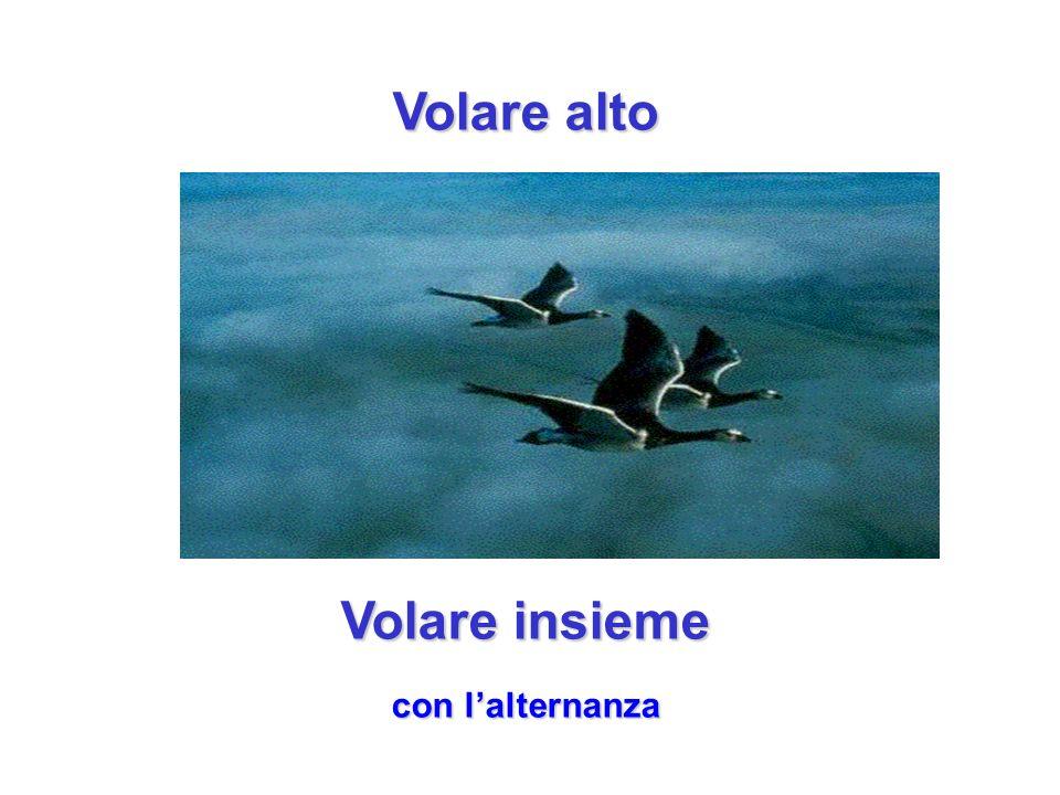 Volare alto Volare insieme con lalternanza