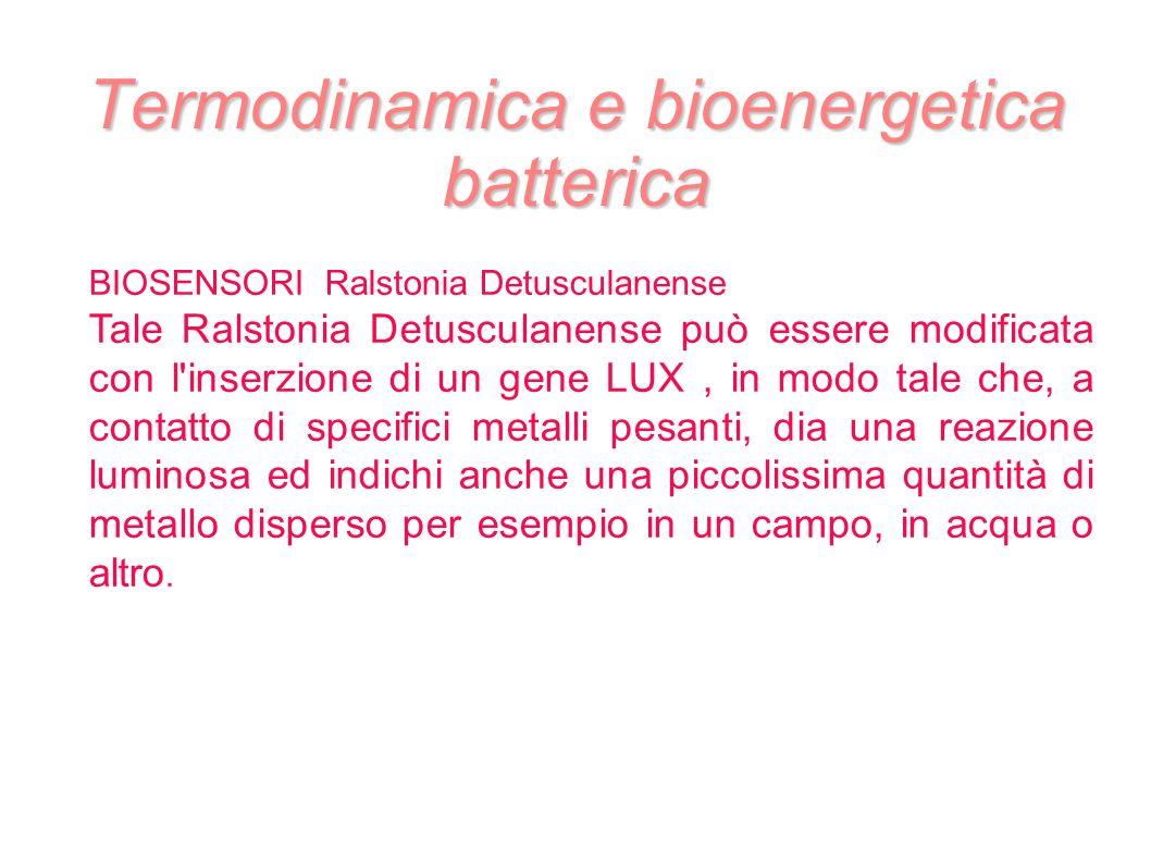 Termodinamica e bioenergetica batterica BIOSENSORI Ralstonia Detusculanense Tale Ralstonia Detusculanense può essere modificata con l'inserzione di un