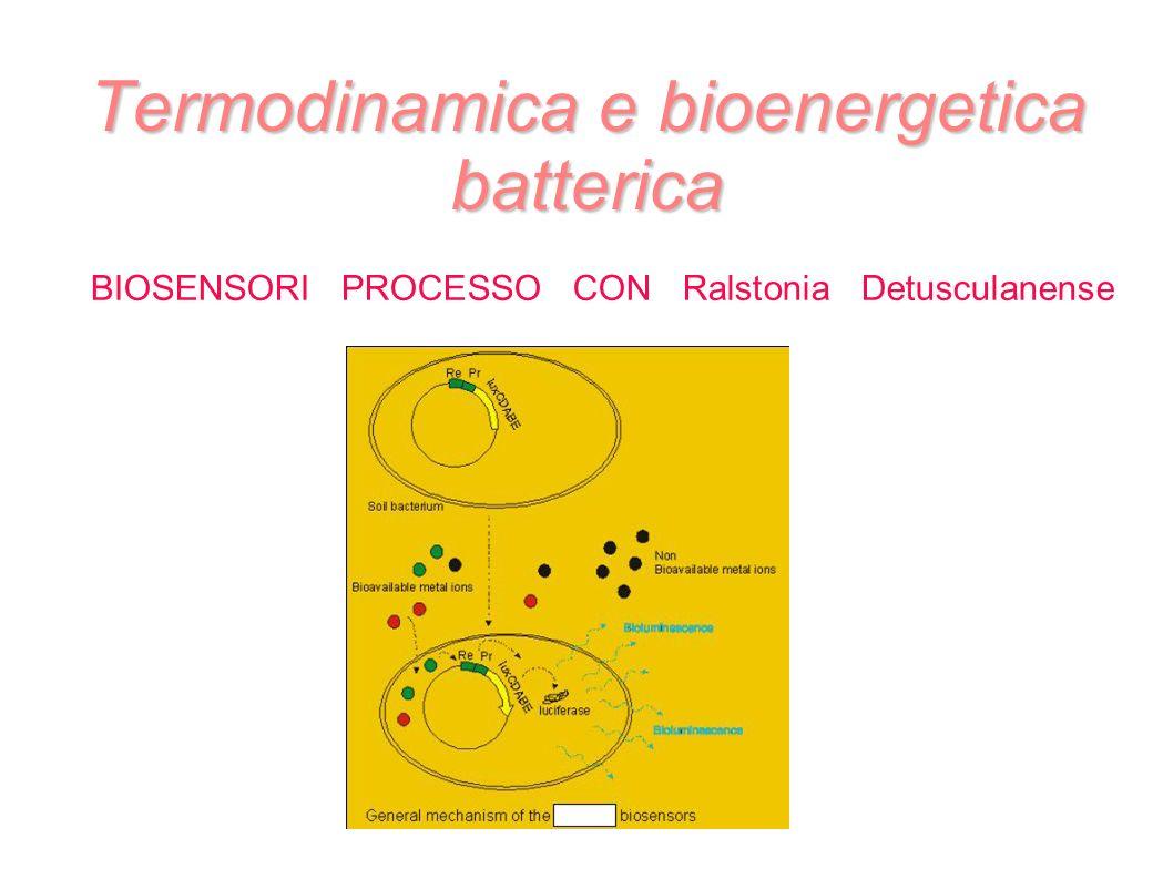 Termodinamica e bioenergetica batterica BIOSENSORI PROCESSO CON Ralstonia Detusculanense Foto biosensore