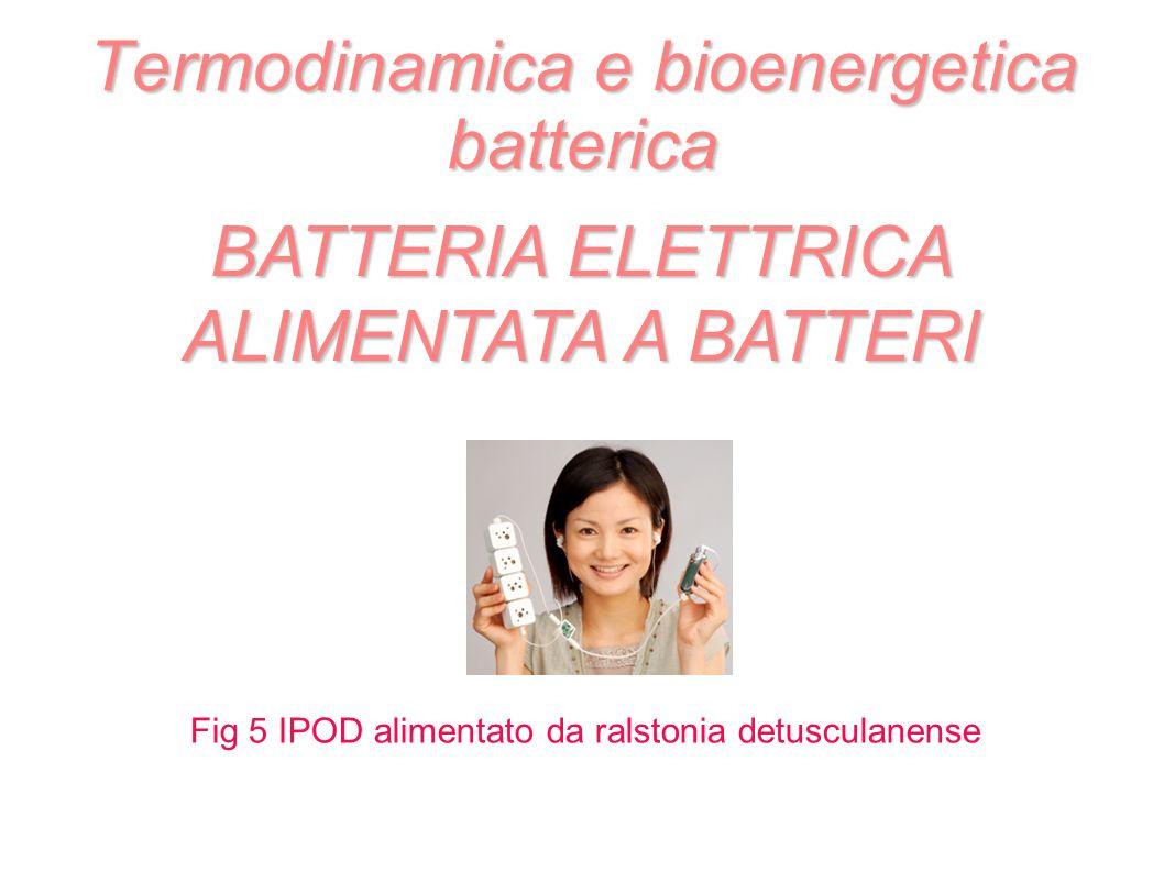 Termodinamica e bioenergetica batterica BATTERIA ELETTRICA ALIMENTATA A BATTERI Fig 5 IPOD alimentato da ralstonia detusculanense