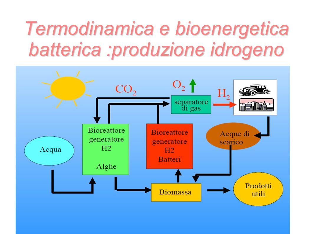 Termodinamica e bioenergetica batterica :produzione idrogeno