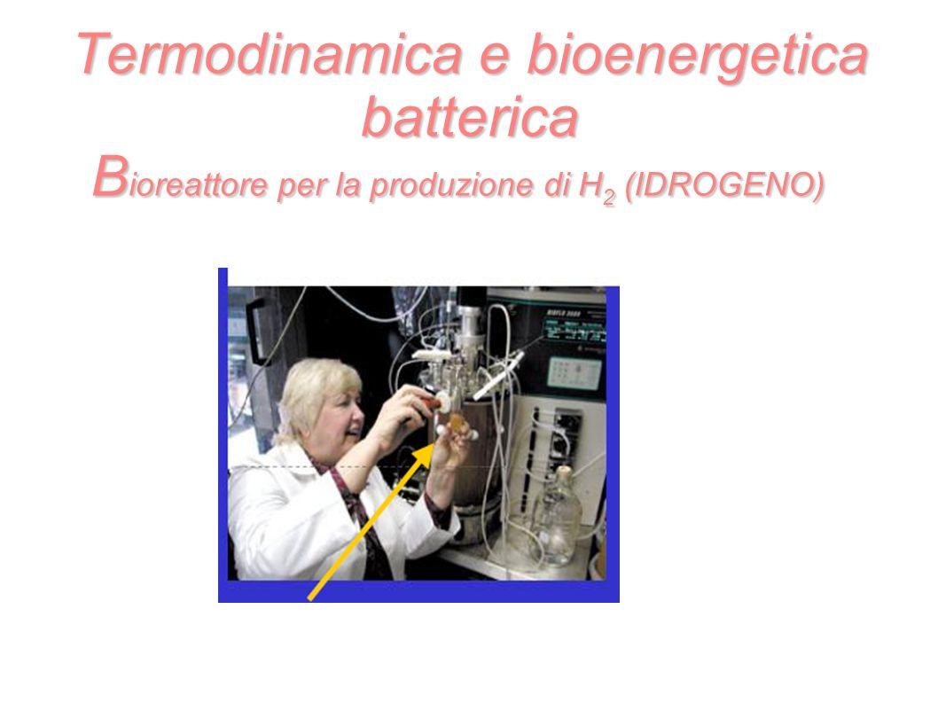 Termodinamica e bioenergetica batterica B ioreattore per la produzione di H 2 (IDROGENO)