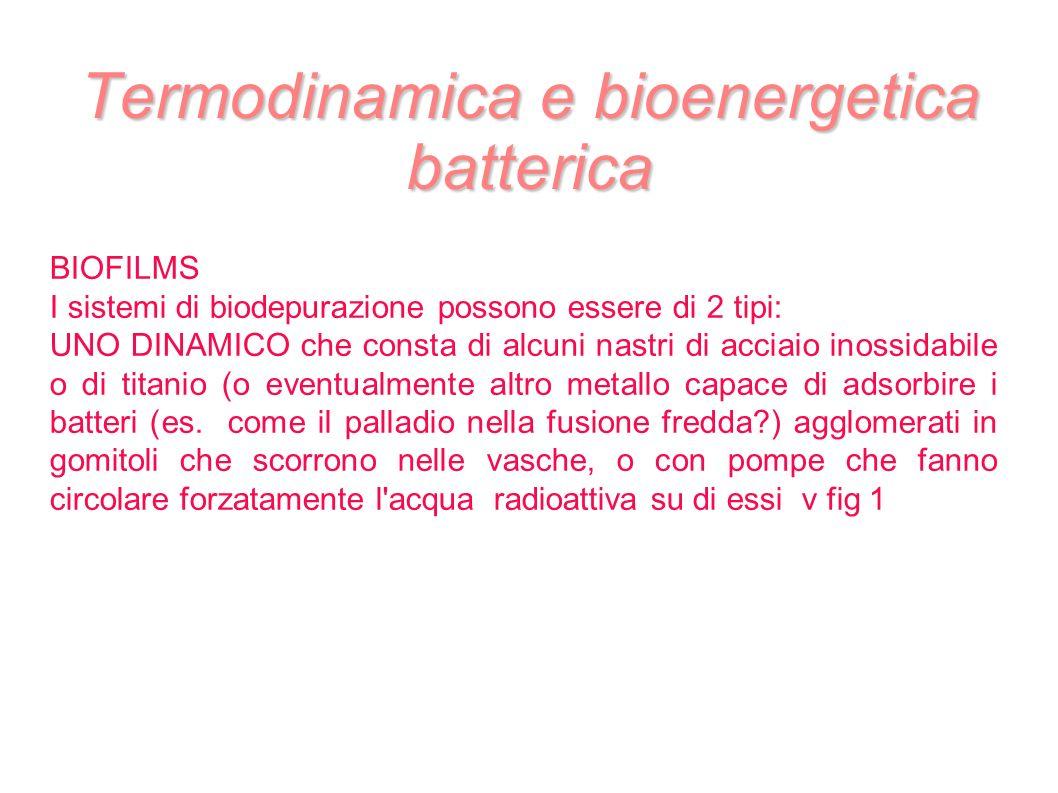 Termodinamica e bioenergetica batterica BIOFILMS I sistemi di biodepurazione possono essere di 2 tipi: UNO DINAMICO che consta di alcuni nastri di acc