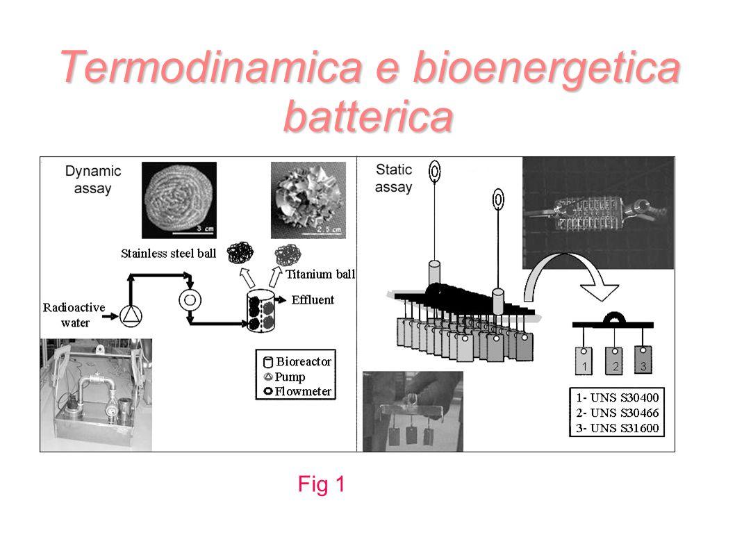 Termodinamica e bioenergetica batterica Fig 1