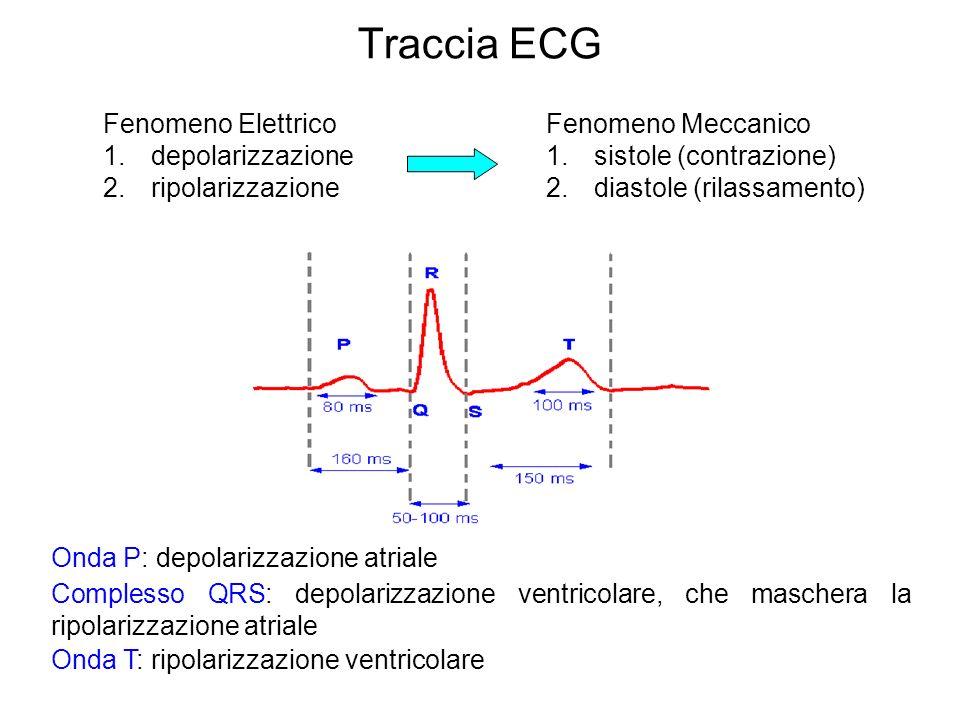 Traccia ECG Onda P: depolarizzazione atriale Complesso QRS: depolarizzazione ventricolare, che maschera la ripolarizzazione atriale Onda T: ripolarizz