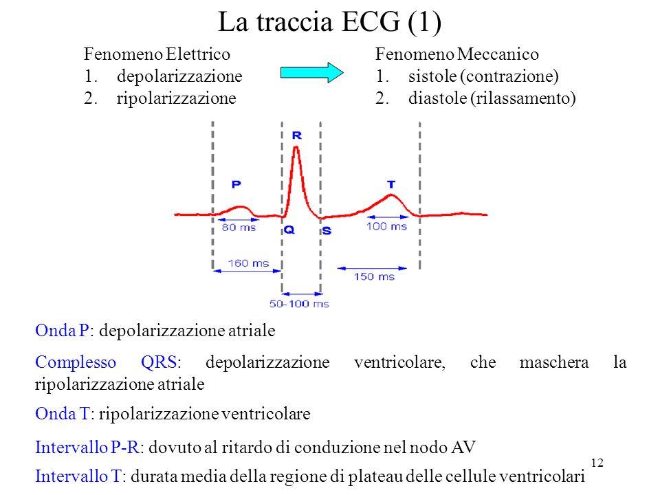 12 La traccia ECG (1) Onda P: depolarizzazione atriale Complesso QRS: depolarizzazione ventricolare, che maschera la ripolarizzazione atriale Interval