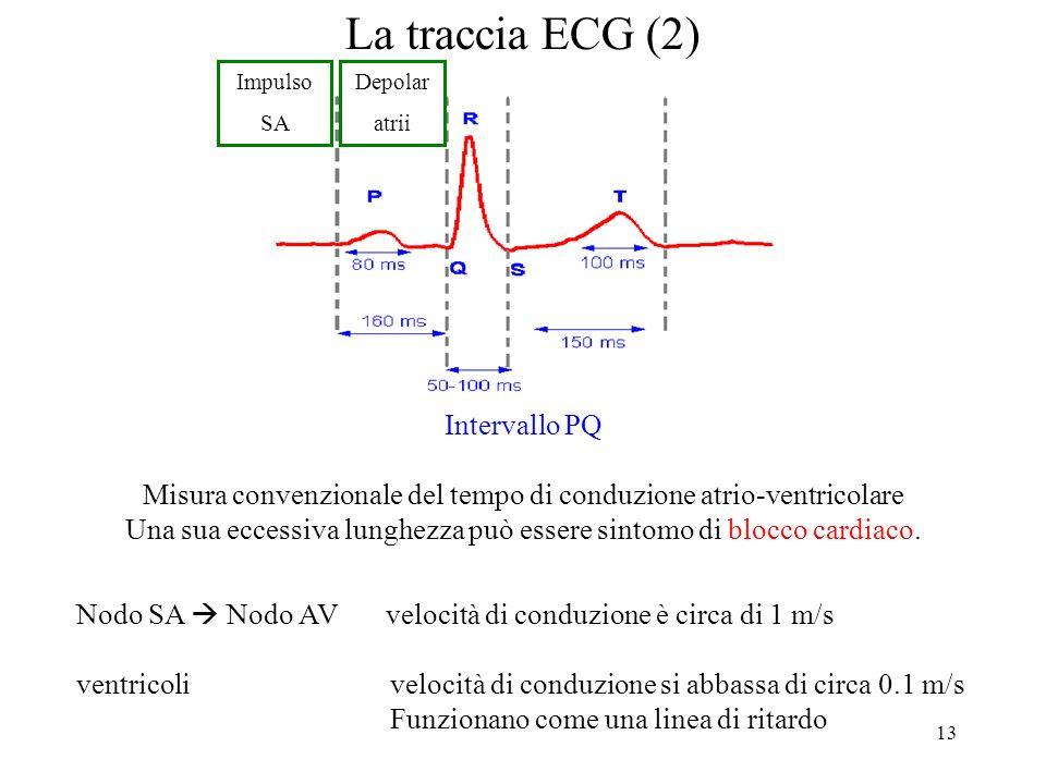 13 La traccia ECG (2) Intervallo PQ Misura convenzionale del tempo di conduzione atrio-ventricolare Una sua eccessiva lunghezza può essere sintomo di