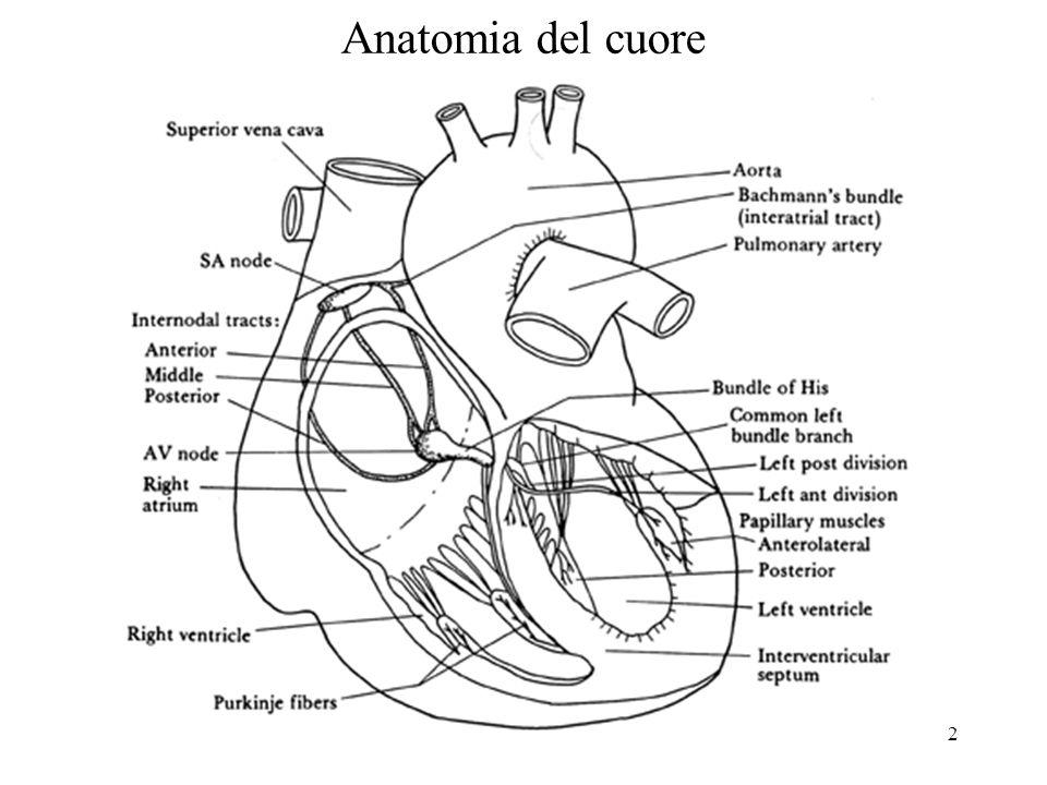 3 Funzionalità del cuore (1) vena cava inferiore vena cava superiore valvola tricuspide valvola mitrale arteria polmonare vena polmonare aorta