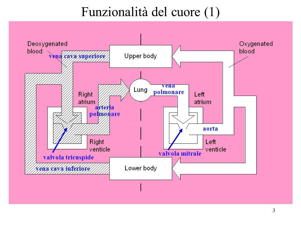 4 Funzionalità del cuore (2) Il cuore è linsieme di due pompe.
